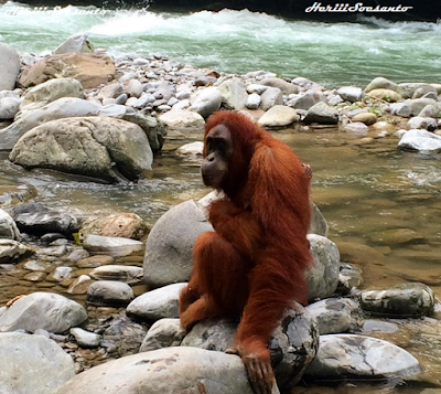 Gunung Leuser National Park, North Sumatera5