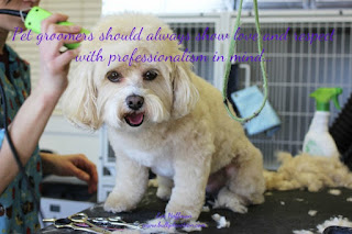 Pet groomers should always show love and respect with professionalism in mind Pet groomers should always show love and respect with professionalism in mind... We should always check on who we allow to care for our furry loved ones.