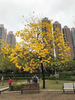 未來兩星期會係開花期,公園會再多好多花啊