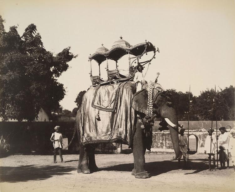 Elephant with a golden ambari (howdah) at Baroda - 1895