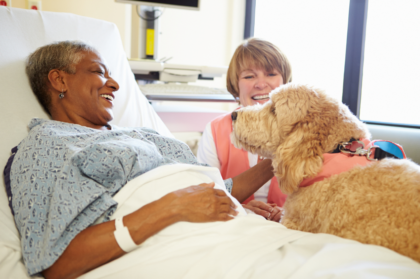Dogs Visiting Nursing Homes Uk