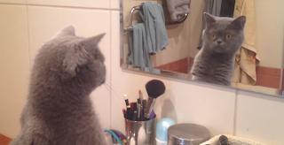 This Cat Loves To Admire Himself In The Mirror