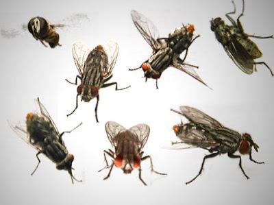 moscas imagenes