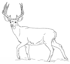 Wild Deer Coloring Sheet Ideas