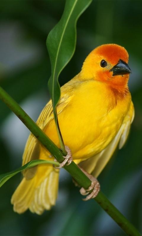 Windows phone wallpapers nokia lumia 520 480x800 - Animal and bird hd wallpaper ...