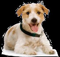 Cachorro língua de fora png