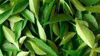 Curry leaf  करी पत्ता के ये फायदे जानकर हो जाएंगे हैरान