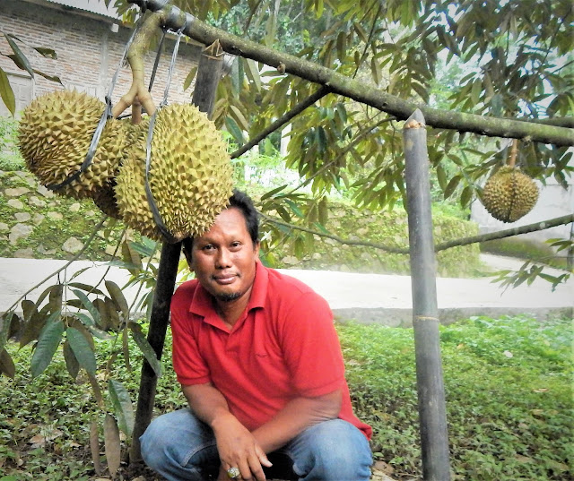 #SAVE BIBIT DURIAN MONTONG