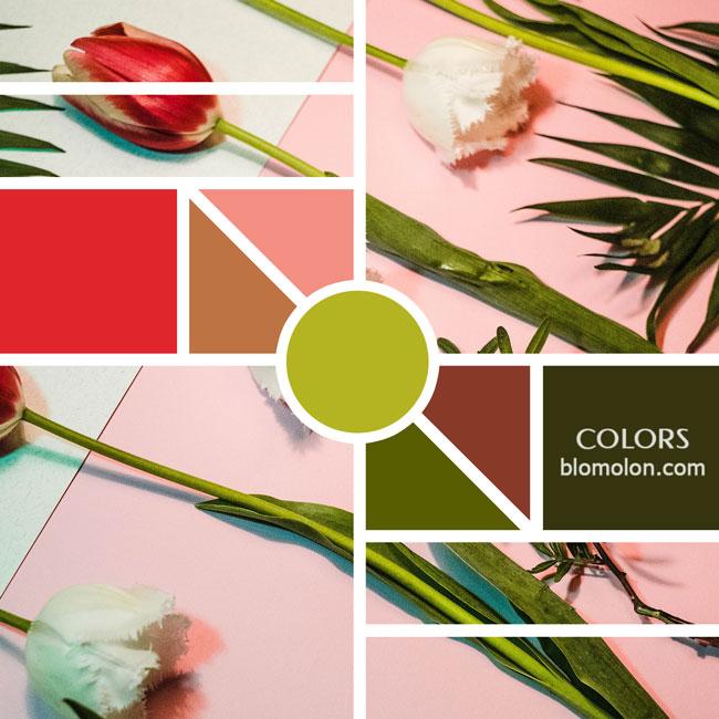 variedad_en_color_moodboards_13