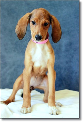 Last Chance Dog Rescue Maryland