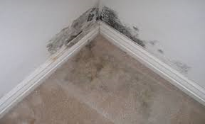 Photo shows the corner of a room with white walls and a brown floor. Black fuzzy mold extends a few inches over the floor and up the wall.