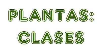 https://cplosangeles.educarex.es/web/quinto_curso/naturales_5/plantas_clasificacion_5/plantas_clasificacion_5.html