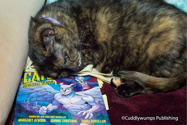 Real Cat Paisley reviewing a cat-themed graphic novel--or sleeping on the job?