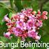 BUNGA BELIMBING - KESERASIAN