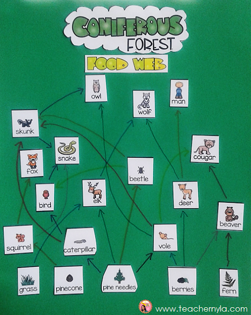 Forest Food Web