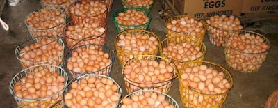 Image result for poultry farming in nigeria