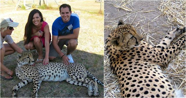 Moyo, Spier Wine State, Touch Cheetahs