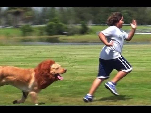 أراد إفزاع الناس بكلبه المتنكر على شكل أسد.. وهذا كان مصيره! إليكم ما حدث مع الرجل...