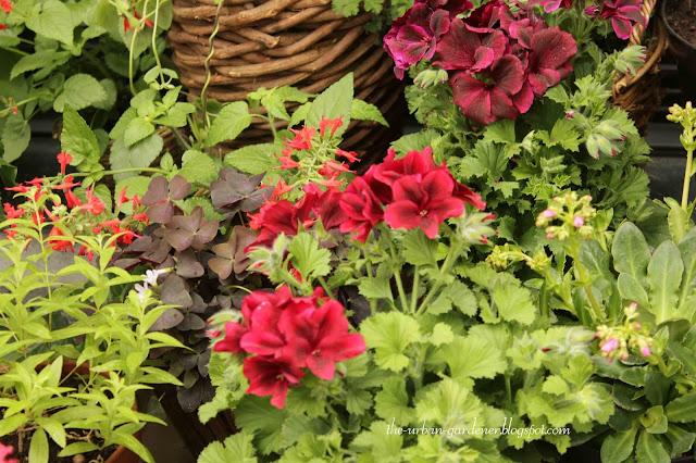 Flowering plants for sale in Zurich