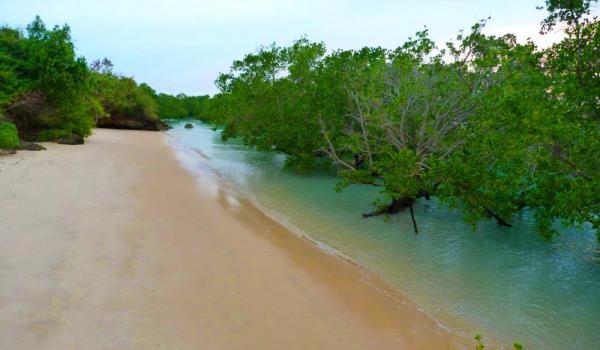Manfaat dan Fungsi Hutan Mangrove menurut Para Peneliti - GO-PERIKANAN
