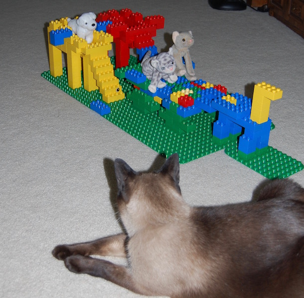 Urban Elves: Cats Play With Lego Blocks Too!