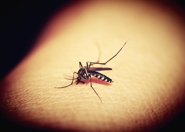 how-to-get-rid-of-mosquito