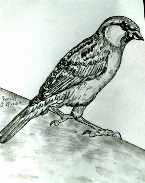 PENCIL DRAWING - SPARROW