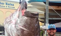 Ψάρεψε τεράστια σφυρίδα 160 κιλών και ηλικίας 50 ετών