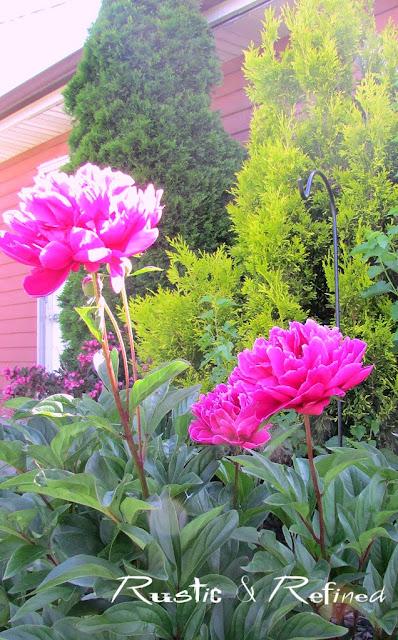 Peony Garden Photos