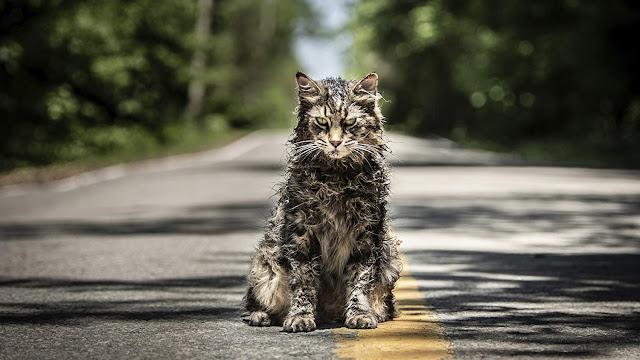 grumpy undead cat