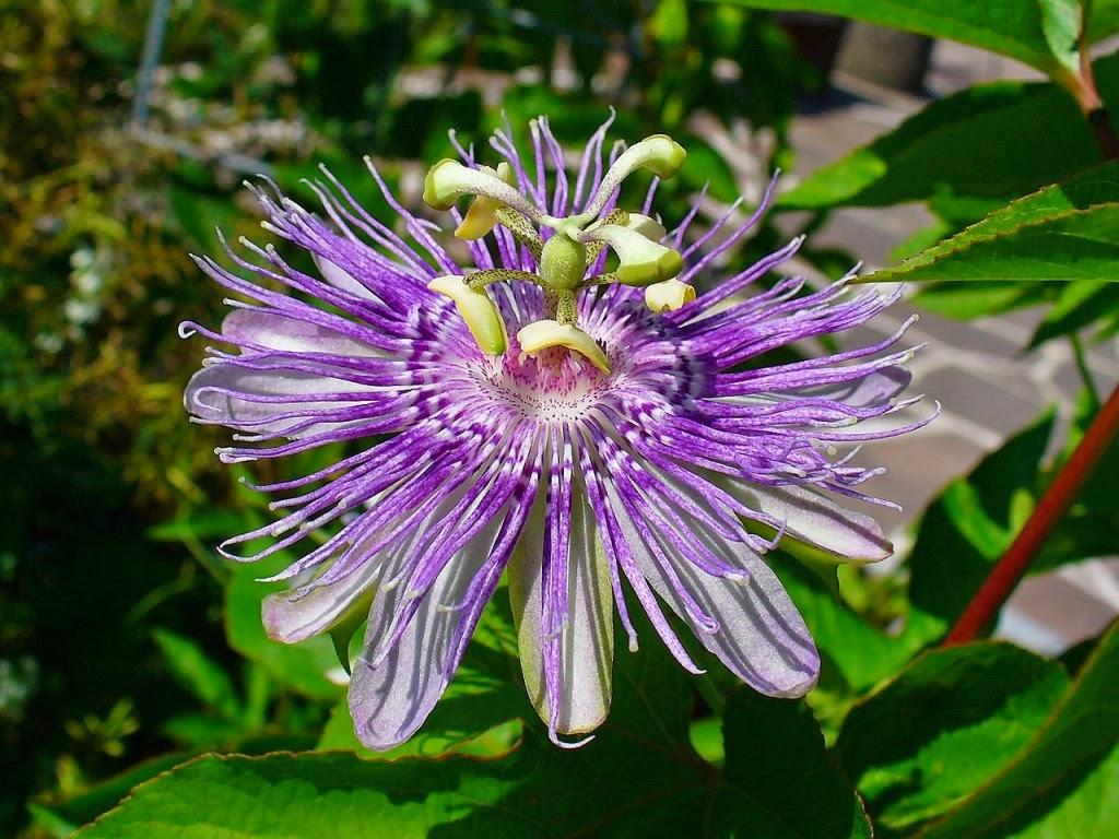 10 bunga paling unik di dunia