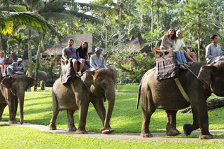 All About Bali Playing with a smart and adorable elephant
