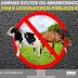 RIBAS DO RIO PARDO| Prefeitura Municipal iniciará o recolhimento, apreensão e controle de animais soltos ou abandonados no perímetro urbano
