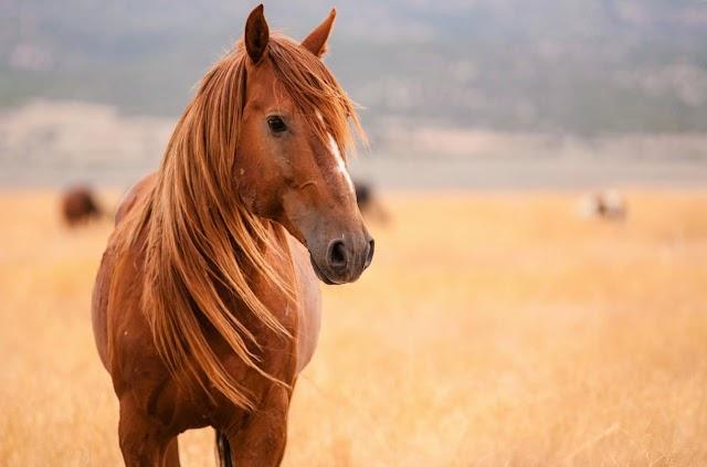 Και τα άλογα μπορούν να επικοινωνήσουν με τους ανθρώπους μέσω συμβόλων!