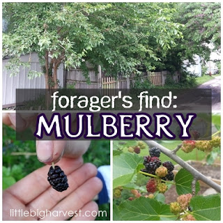 http://www.littlebigharvest.com/2015/06/foragers-find-mulberry.html