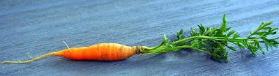 manfaat-wortel-bagi-kesehatan,www.healthnote25.com