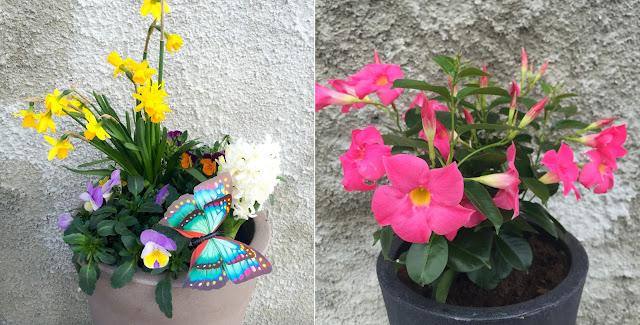 Blumen, Flowers, Dekoration, Gartenblumen