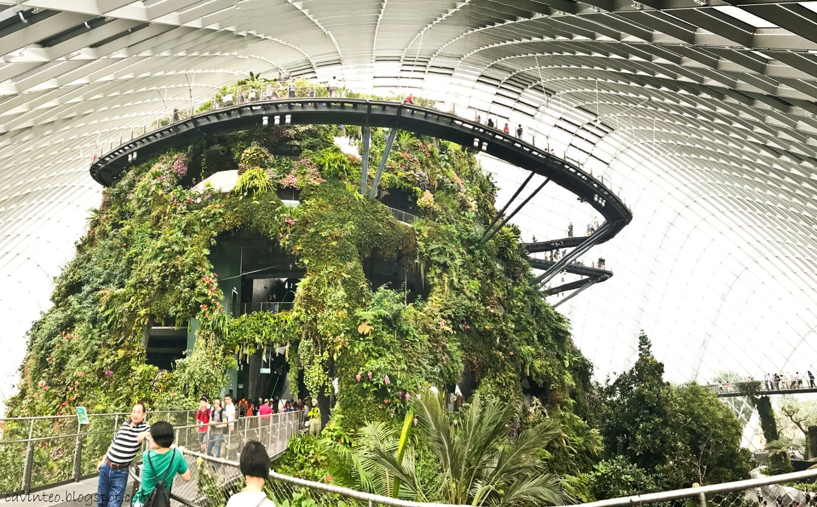 Image result for cloud forest singapore