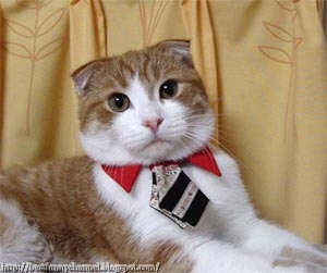 Cat with a tie.