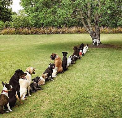 Väluppfostrade svenska hundar?
