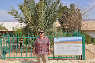 2,000 Year Old Seed Sprouts Into Full-Grown Palm Tree In Israel