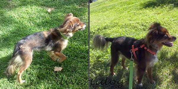 Comparativa de collar y arnés de perro