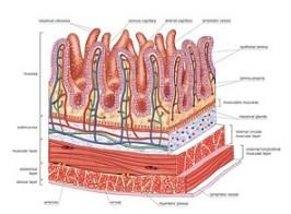 Daun sirsak yg sudah dikenal sebagai obat tradisional pengikat dan pembunuh virus penyeb Tips Bagaimana Cara Mengolah Daun Sirsak Untuk Kelenjar Getah Bening