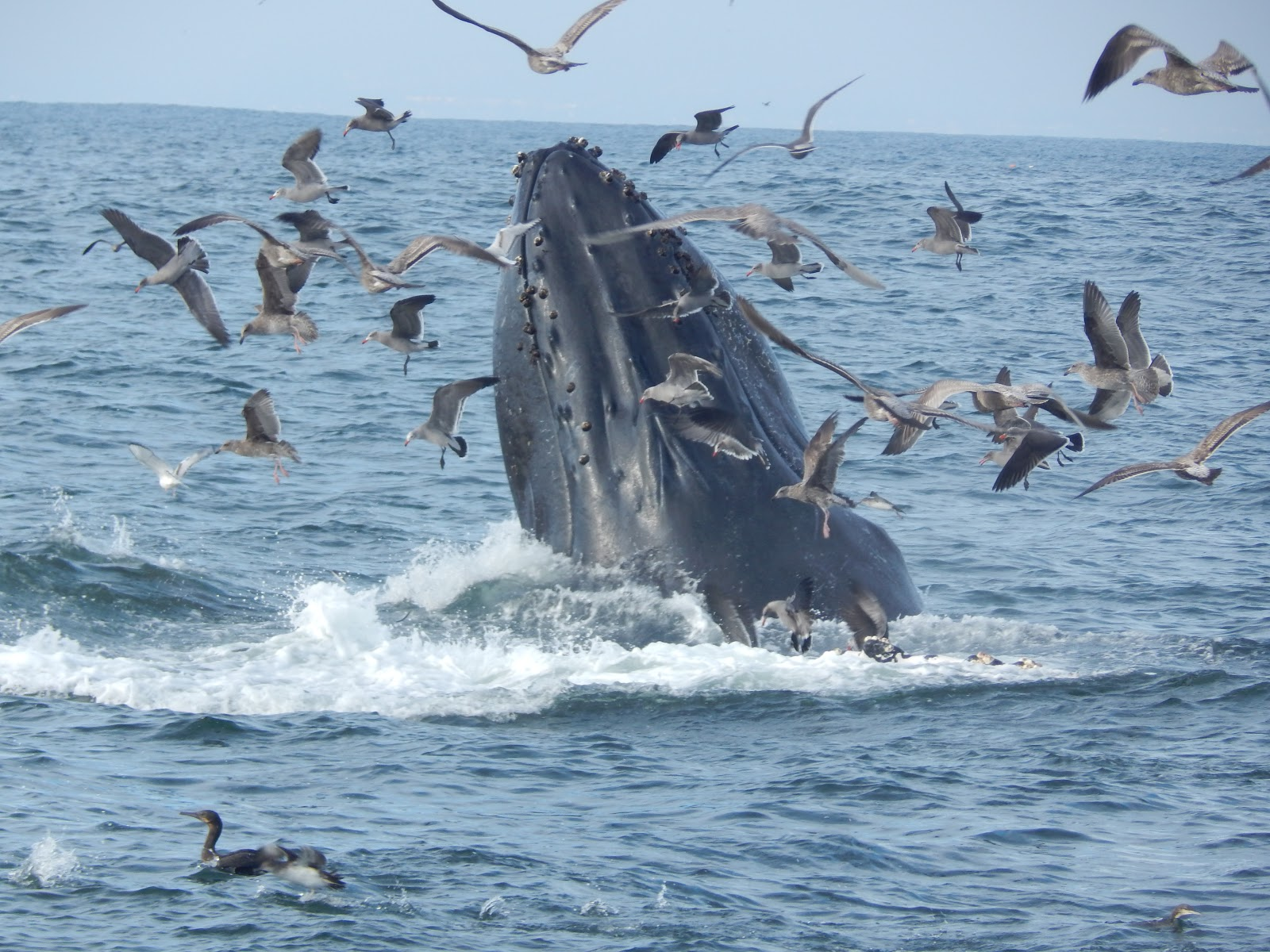 The Radula In The Lull Between Whales