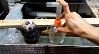 Cara Membuat Filter Aquarium Menggunakan Aerator