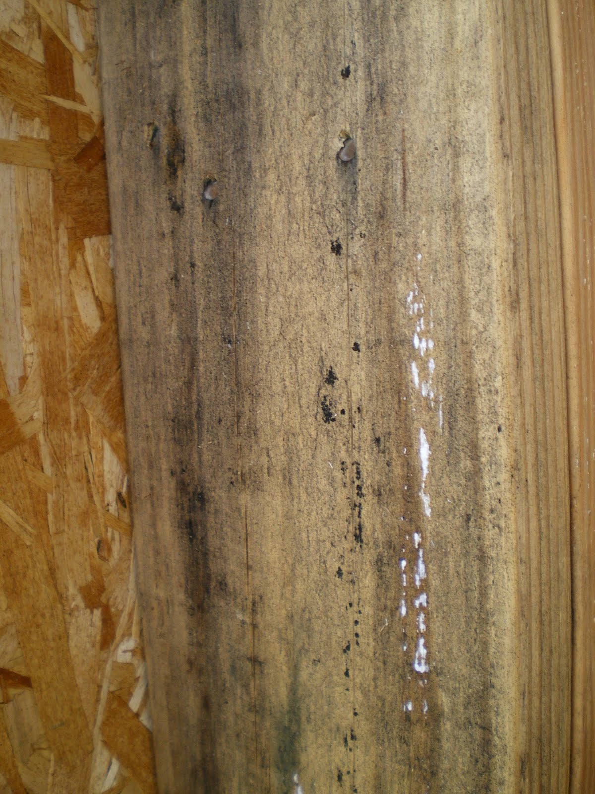 Local Fruit: Lumber Mold