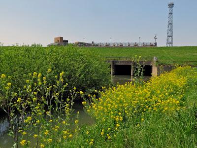 首都圏外郭放水路・庄和排水機場