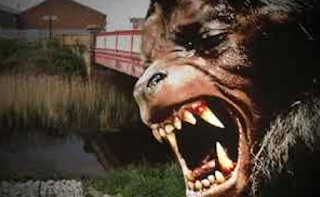 Fears An American Werewolf On The Prowl