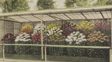 Algunas flores japonesas de Kazuma Ogawa