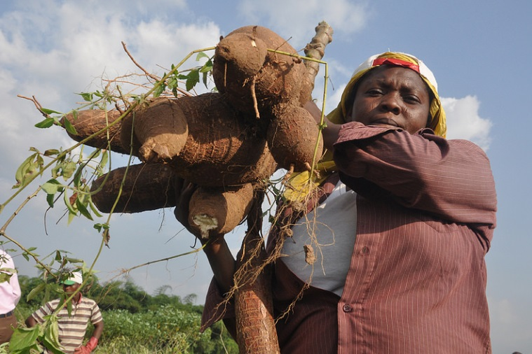 Woman carrying cassava, Yangambi, Democratic Republic of Congo.
